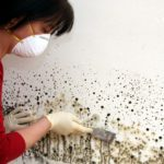 Checking Black Mold in Your House