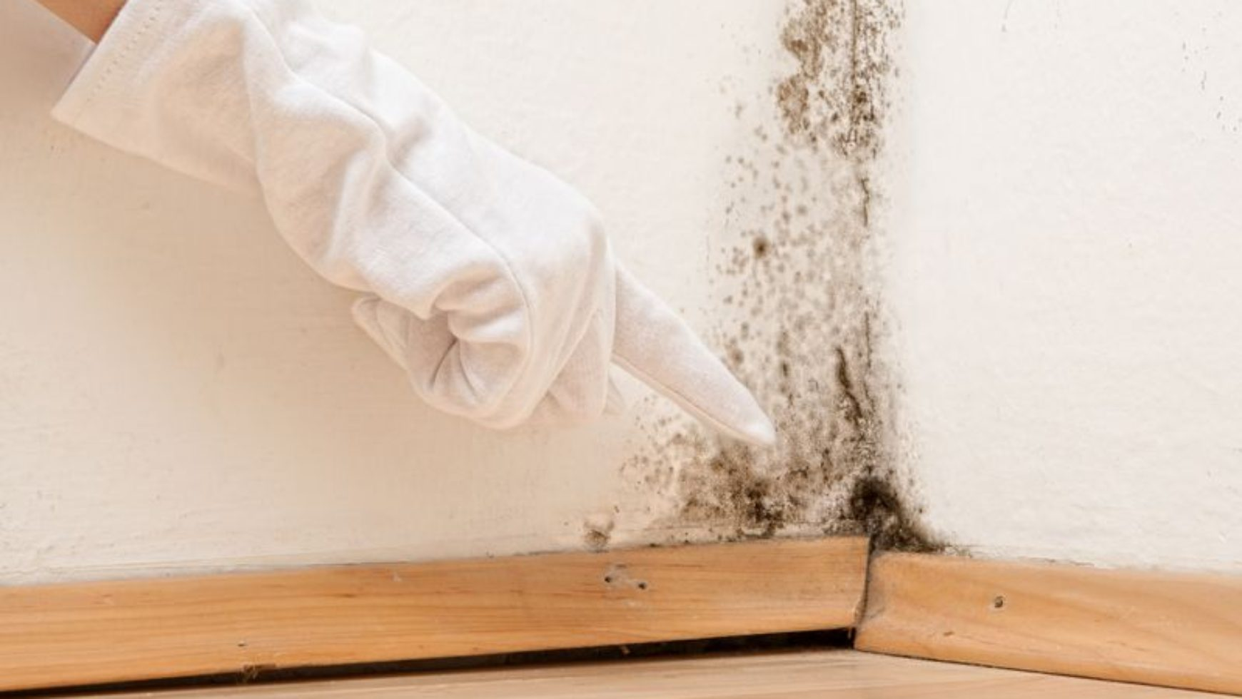 Difference between Mold and Mildew