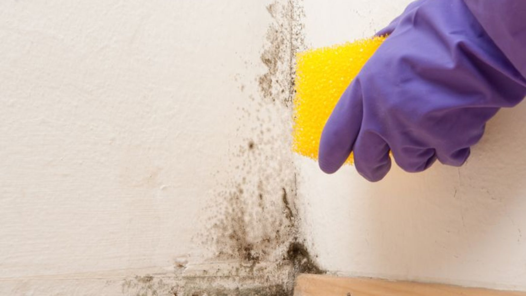 Annual Mold Inspections: Scam or Savior?