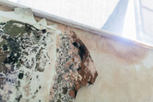 Aventura Mold Remediation